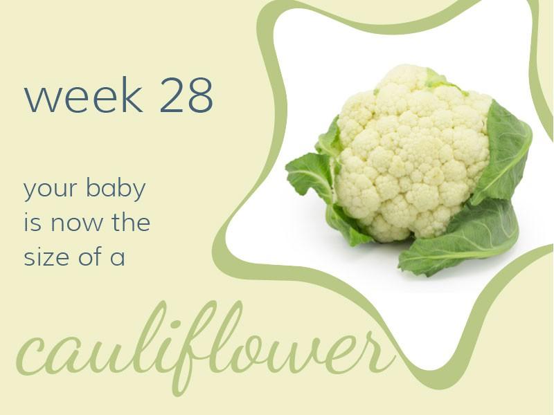 pregnancy-week28