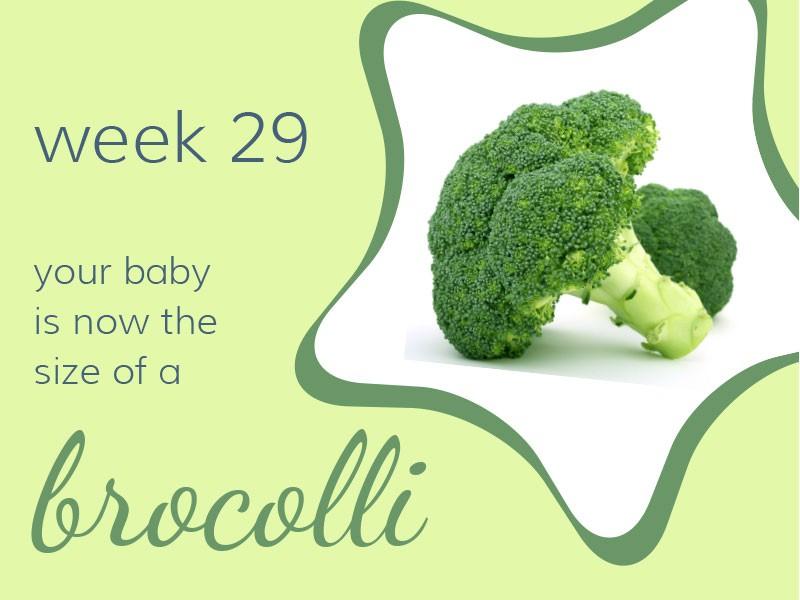 pregnancy-week29