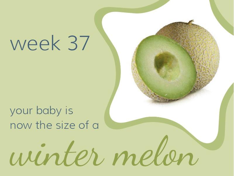 pregnancy-week37