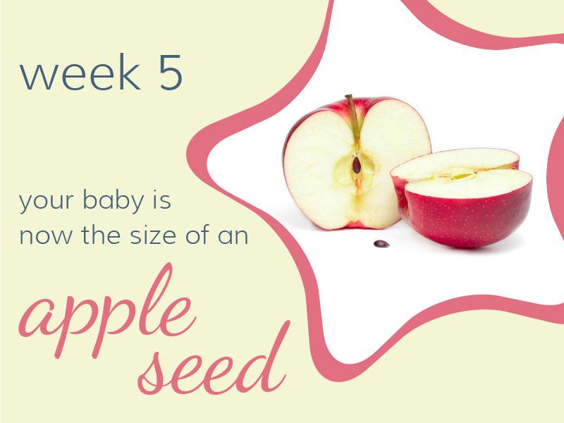 pregnancy-week5